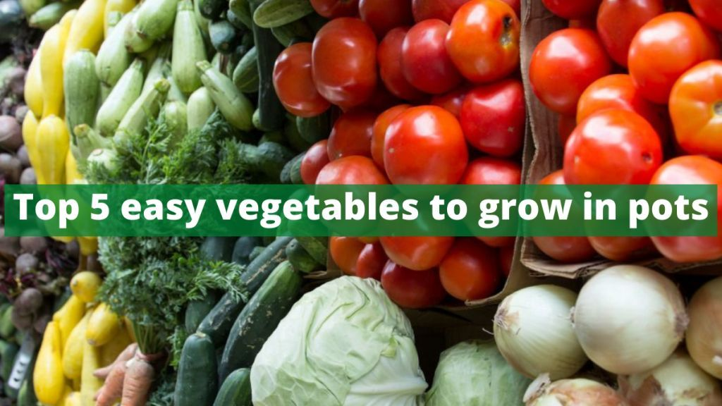 easy vegetables to grow in pots
