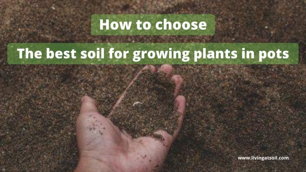 best soil for growing plants