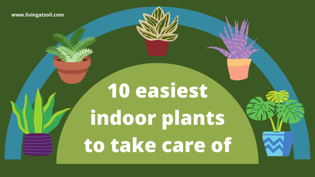 Easiest indoor plants to take care of