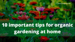 tips for organic gardening at home