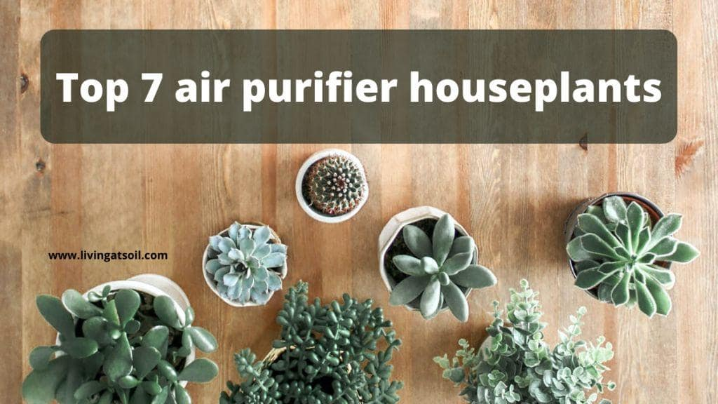 air purifier houseplants