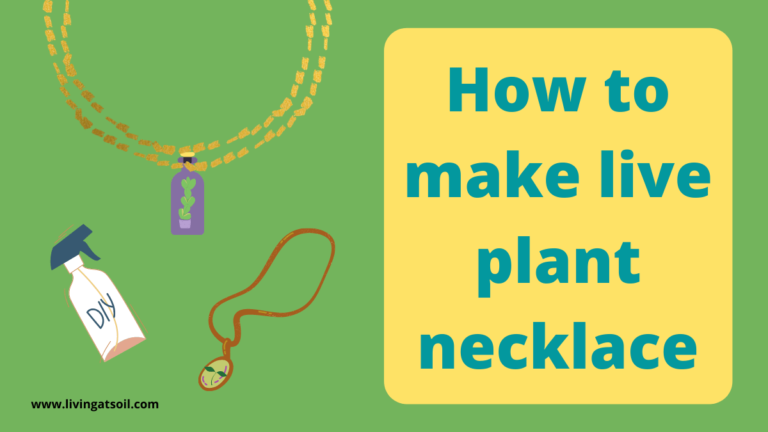 How to make a live plant necklace