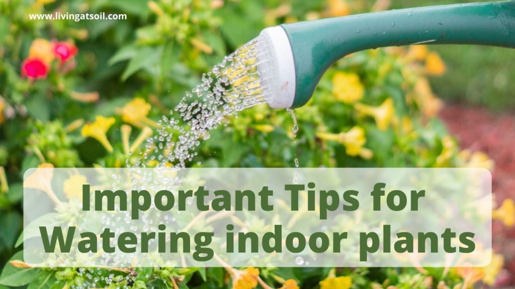 Tips for watering indoor plants