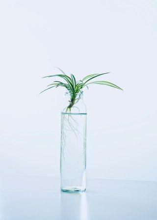 houseplants that grow in water