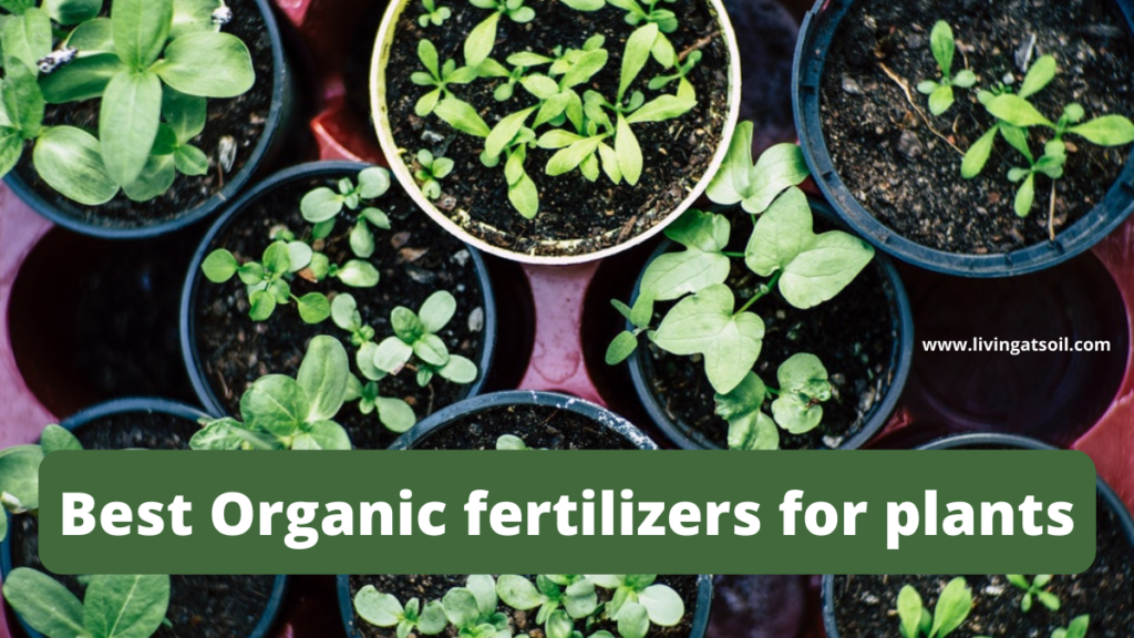 Best Organic fertilizers for indoor plants